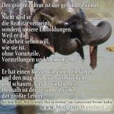 Der Rüssel des Elefanten